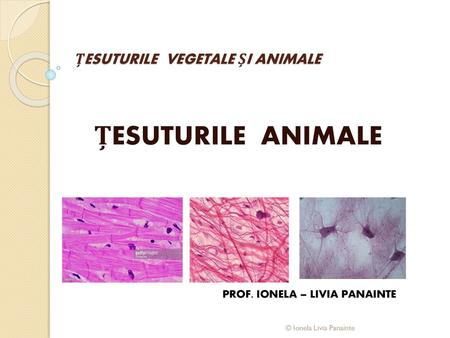 ȚESUTURILE VEGETALE ȘI ANIMALE